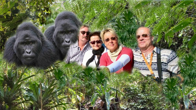 Gorilla-Tracking 2013